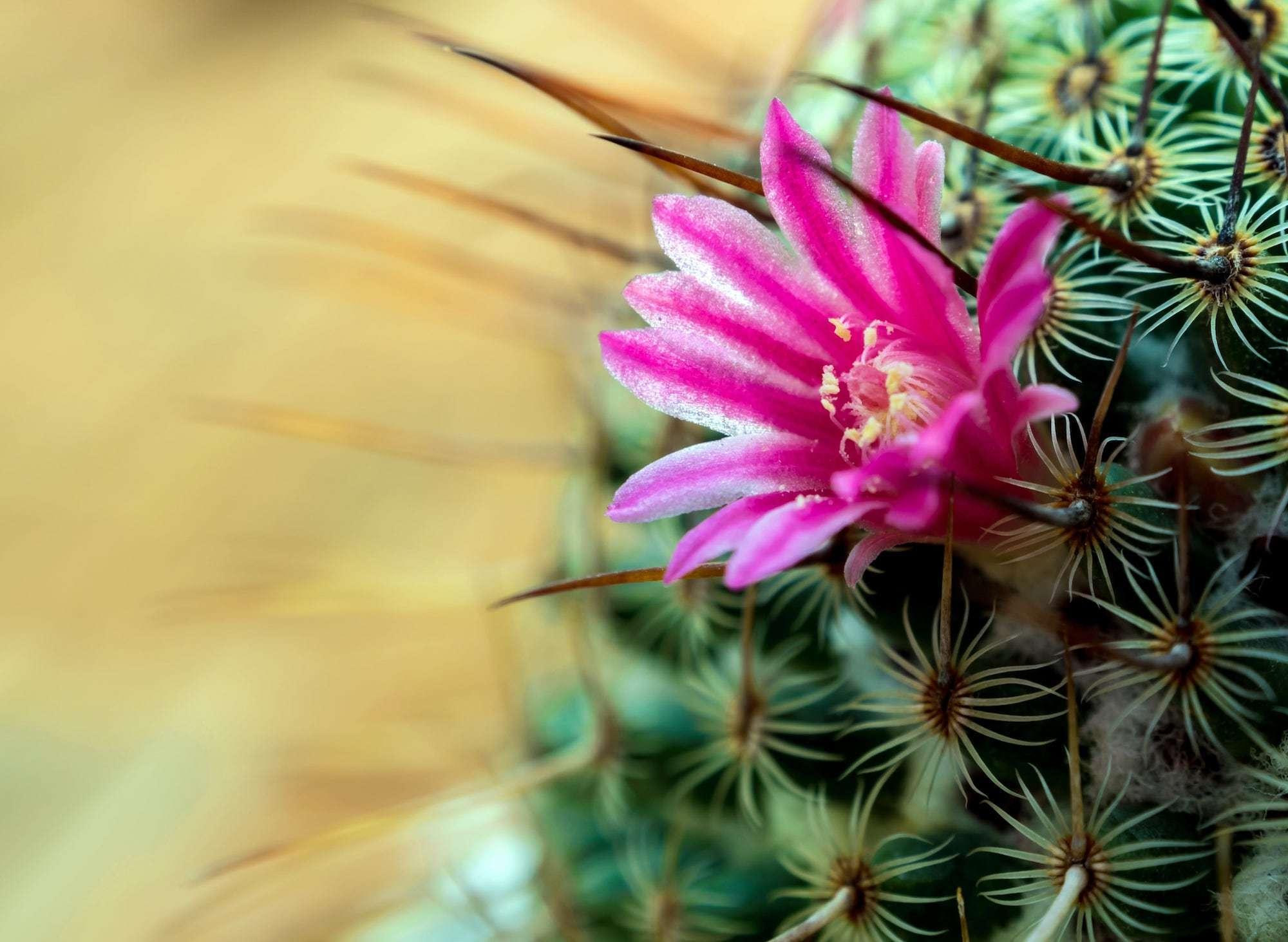 La storia del fiore con le spine: difendersi quanto basta | Dipendiamo.blog