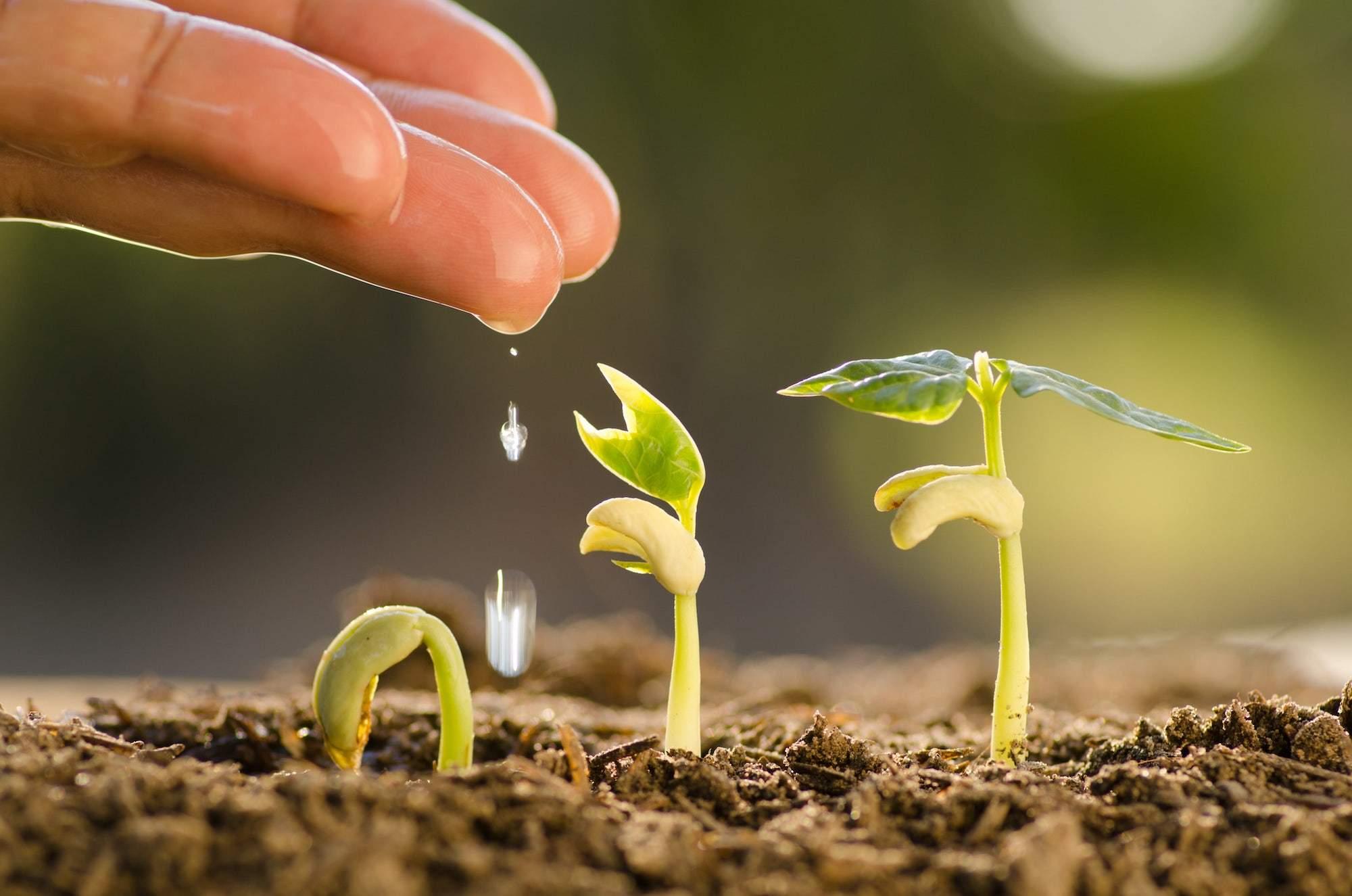 Da piccolo seme a germoglio di una nuova vita | Dipendiamo.blog