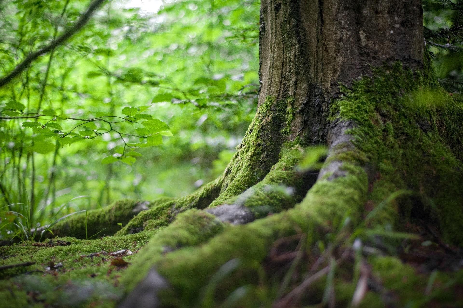 Difese naturali: contattare la propria saggezza interiore | Dipendiamo.blog